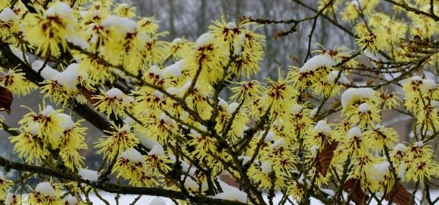 Za 24/03: ZieleZingend de lente verwelkomen