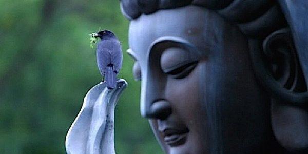Wo 13/11: Peacefulness met klankyoga – Leven met vrede als basis
