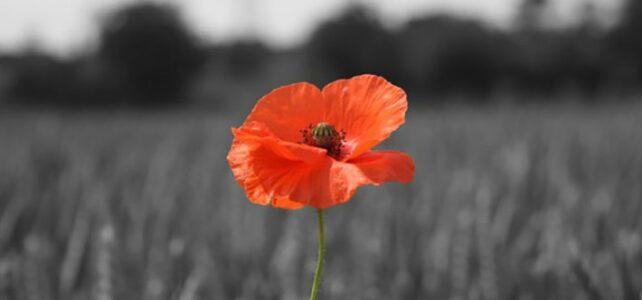 11/11 – Free: Meditatief afstemmoment voor vrede op Wapenstilstand