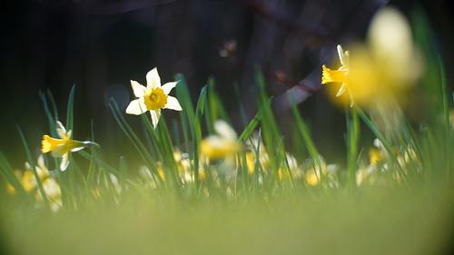 4/4: Al ZieleZoomZingend Pasen vieren: Laten we verrijzen en voluit leven
