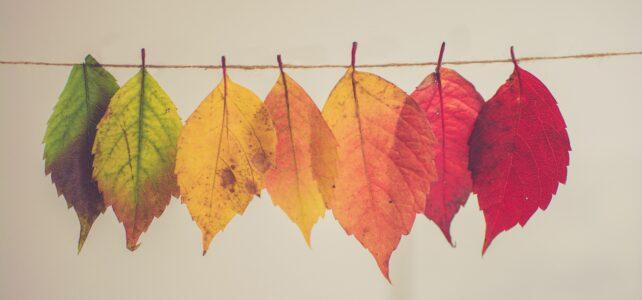 23/10: ZieleZingen op het ritme van de herfst